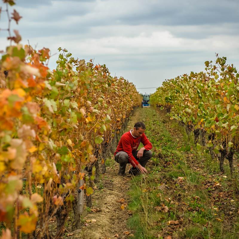 vigneron dans sa vigne, vin, viticulture, Sébastien Garcia, des Sites et des Lettres, création de site, photographie